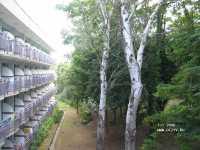 Magnolia фото