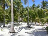 Bohol Beach Club фото
